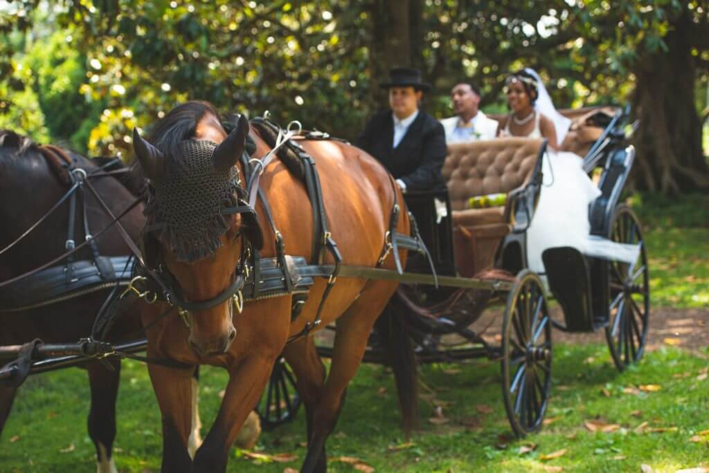 Horse drawn carriage for richmond spring wedding